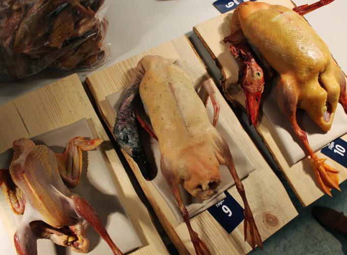 Sveriges just nu bästa fågel, nöt och gris